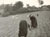 1900-travaux-champs